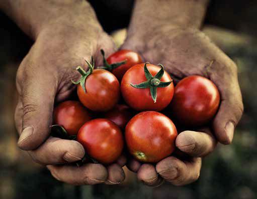 menu tomato